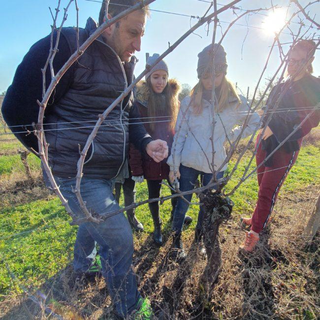 Visita con degustazione vini a Muscoline - La Guarda