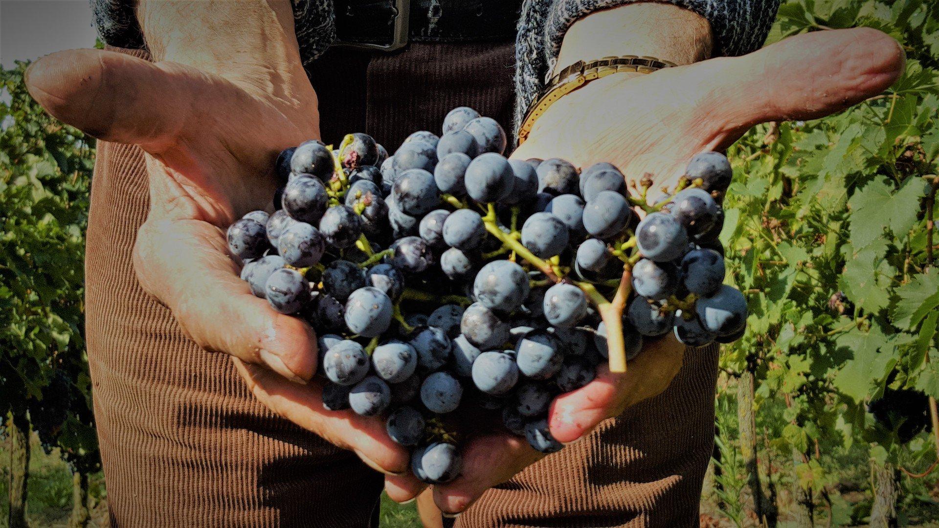 La Valtenesi - produzione vino e olio