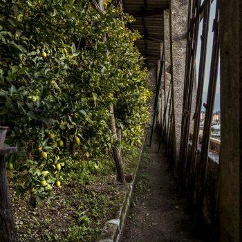 Limonaia-La-Malora-Gargnano-Copertura-Serra-01